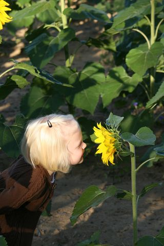 Ellie_in_the_sunflower_field_5