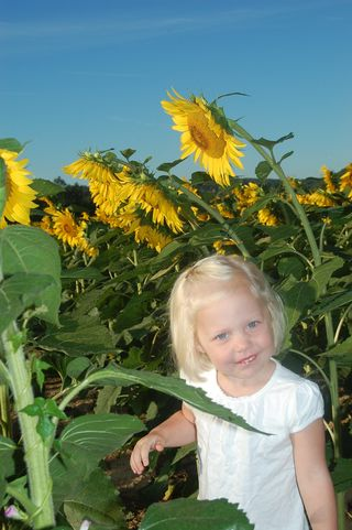 Ellie_in_the_sunflower_field_1