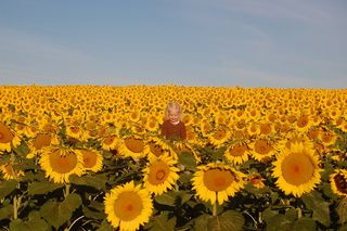 Ellie_in_the_sunflower_field_2