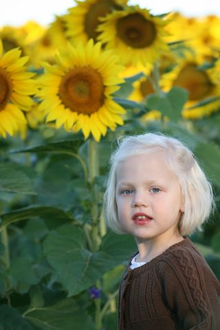 Ellie_in_the_sunflower_field_3